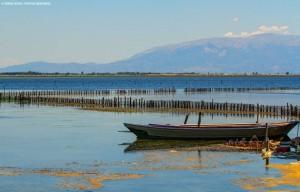 Τα υδάτινα οικοσυστήματα της περιοχής φιλοξενούν χιλιάδες πουλιά
