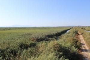 Ο καλαμιώνας της Ροδιάς, ο μεγαλύτερος αμιγής καλαμιώνας των Βαλκανίων