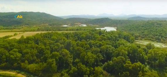δάσος φράξου